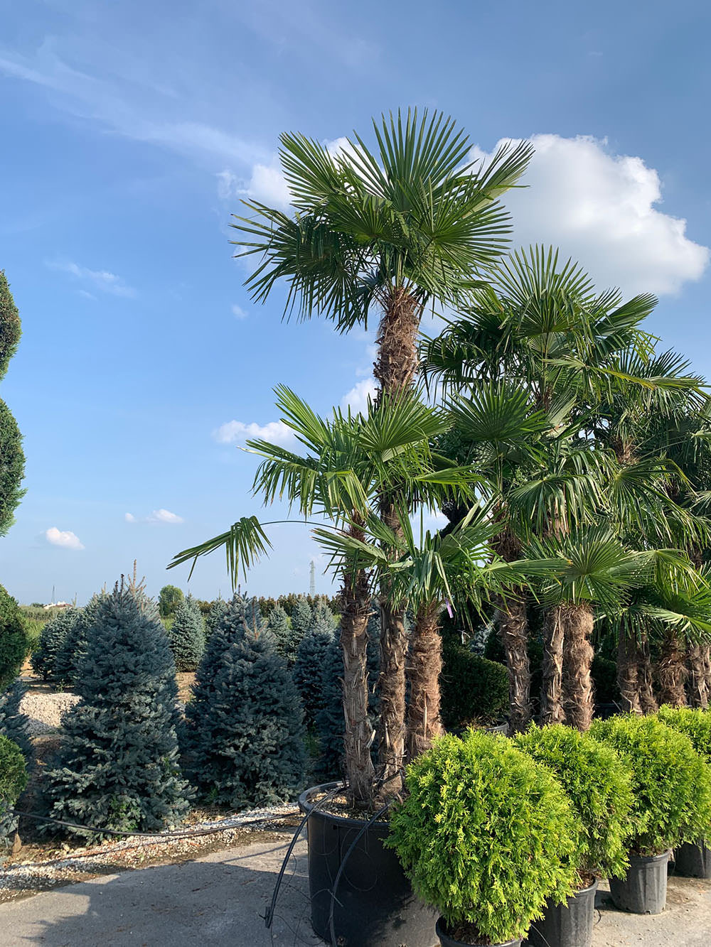 Création Bâti Jardin - Pépinière